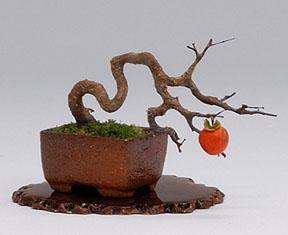 Bonsai of Japanese Persimmon, class project of Hiroyuki Kimura.